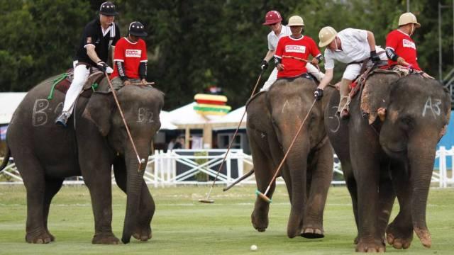 polo elefante